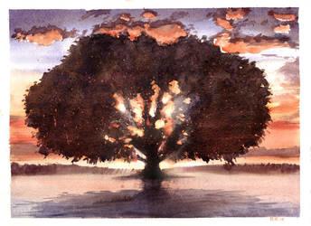 Tree of Life by bearmantooth