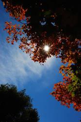 Flare into Fall by prettyflour