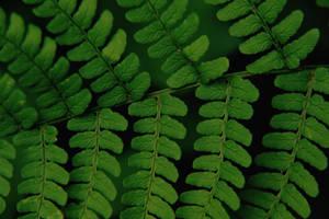 leaf crossing by prettyflour