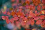 Fall into color by prettyflour
