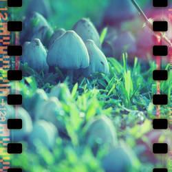 mycelia by b2spiritcat