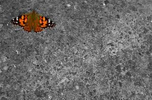 Butterfly by bossydk