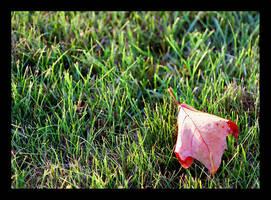 Autumn Leaf by bossydk
