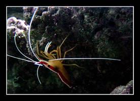 Aquarium series 1 by bossydk