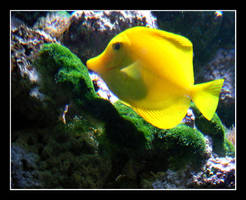 Aquarium series 3 by bossydk