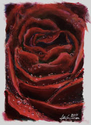 rose painting by pyrochic127