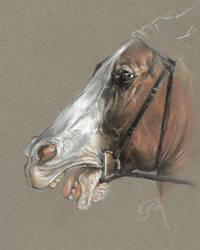 Horse by bull-terrier