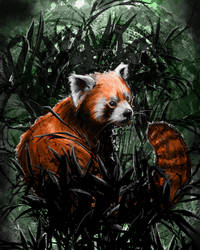 A Red Panda by Rorus007