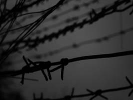 barbed wire by Die-Schadenfreude