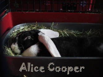 Meet Alice Cooper! by Shirley-Agnew-Art