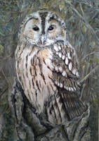 Miki's Owl by acrylicwildlife