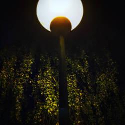 One little light in a dark world by emil8650