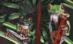 Tree Frog Combo by marcgosselin