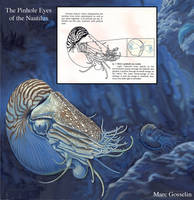 The Pinhole Eye of the Nautilus by marcgosselin