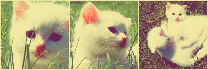 Meow by nicosaure