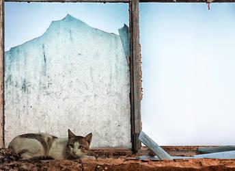 A Cat Portrait by Skevlar