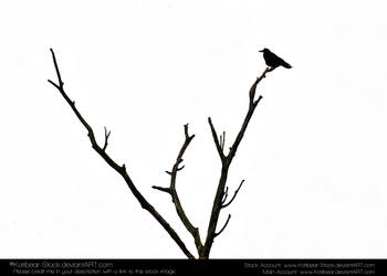 Animals 032 - Bird Silouette by Katibear-Stock