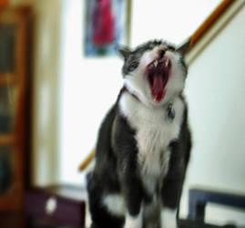Yawn by vetal-vetal
