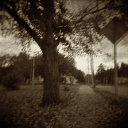 Tree To The Left by vetal-vetal