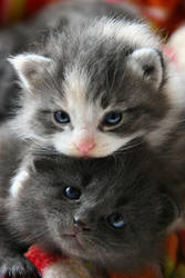 Kittens by spesiellise
