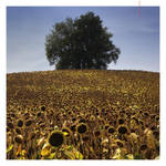 sunflower hills by EintoeRn