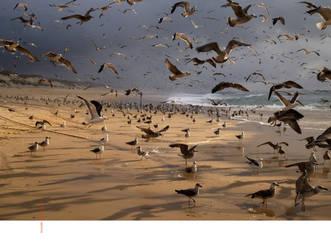 birdland by EintoeRn