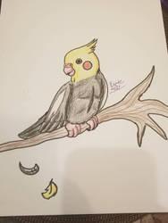 Cockatiel (test) by Heart-of-a-Artist