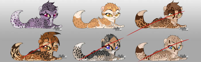 New Cheetahs adopt (open 7$) by mydlas