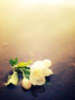 blossoms. III by retrobishojo