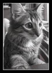 Sweety Kitty by FlightOfFantasy