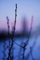 twig by lizzy2012