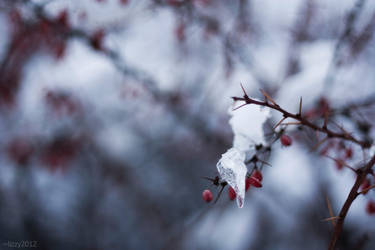 frozen by lizzy2012