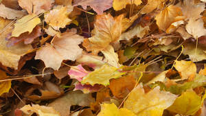 Autumn Leaf Pile by JenniBeeMine
