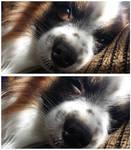 Sleepy Puppy by JenniBeeMine