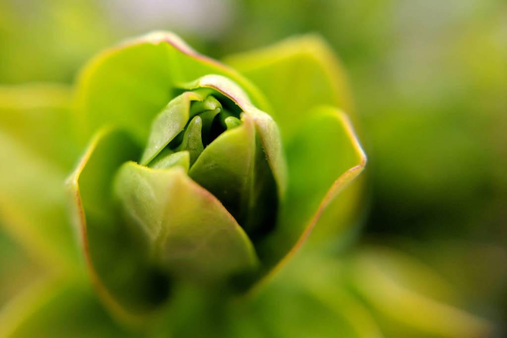 I See Leaves Of Green by JenniBeeMine