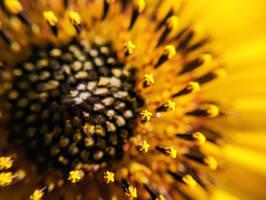 Wild Sunflower by JenniBeeMine