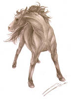 -Horse- by GalaciaBarton