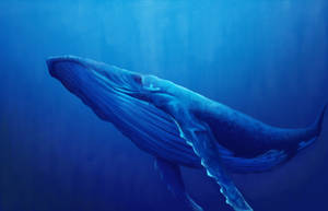 Humpback Whale by Kmalmsten