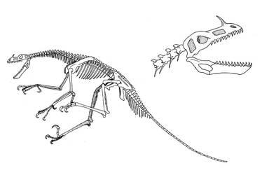 Tigricoloris skeleton by Larua