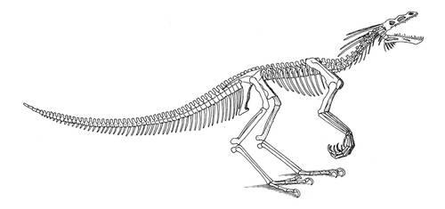 Pinnimentus skeleton by Larua