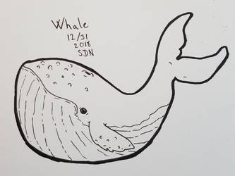 inktober whale by Sussi
