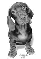 Dachshund Puppy by Torsk1