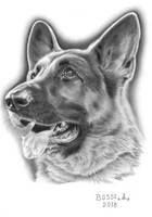 German Sheperd 3 by Torsk1