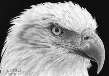 Eaglehead 3 by Torsk1