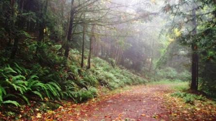 Forest Road by cjosborn