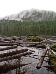 Logs in the Lake by cjosborn