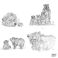 Bear sketches 2 by K-Bladin