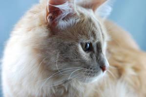 Kitty by Kiiranilen