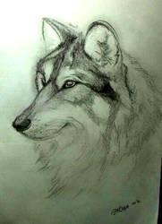 Wolf by Schkoda