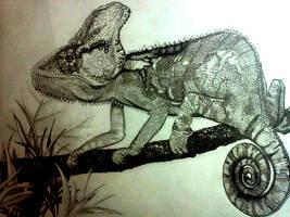 Chameleon by Schkoda